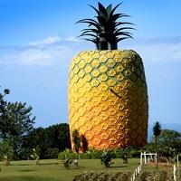Big Fruits of Australia